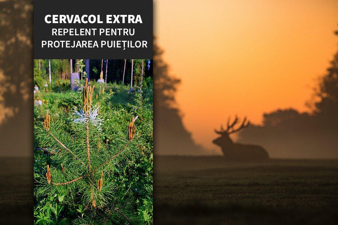 Repelent pentru protejarea puieților din plantații împotriva roaderilor produse de cervide.